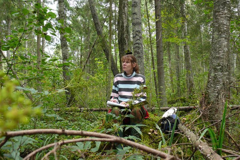 Ökoloogi ekspertarvamus: Lohusalu luitemetsade loodusväärtuslikkus