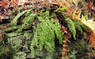 Keskkonnaamet korraldab Laulasmaa maastikukaitseala kaitsekorralduskava