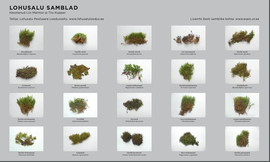 Lohusalu poolsaare samblad, samblikud ja kivikülvid